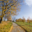 Small road through rural autumn tree landscape — Stock Photo