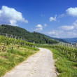 Path through green vineyard landscape — Stock Photo #33916391