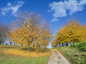 Colorful autumn trees and fallen leaves on country road — Stock Photo
