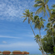 Постер, плакат: Tranquil tropical island beach with palm trees