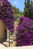 Staircase surrounded by purple Bougainvillea — Stock Photo