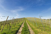 Steep path upwards through vineyard landscape in early summer  — Stock Photo