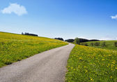 Winding road through rural summer landscape — Stock Photo