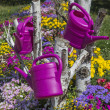 Colorful flower garden with watering can hanging down — Stock Photo