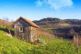 Wooden cottage hut in vineyards — Stock Photo