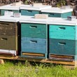 Beehive wooden boxes in green grass — Stock Photo #51752799