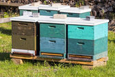 Beehive wooden boxes in green grass — Stock Photo