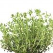 Leaves of thyme — Stock Photo
