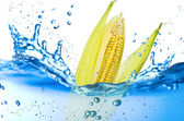 Corn splash — Stock Photo