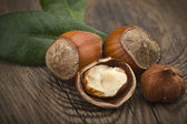 Hazelnuts — Photo