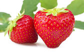 čerstvé jahody — Stock fotografie