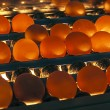 Stock Photo: Eggs shipped and illuminated