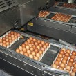 Egg packaging lines 3 — Foto Stock