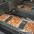 Egg packaging lines 3 — Stock Photo