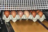Linea di confezionamento uovo 2 — Foto Stock