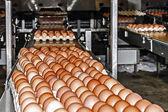 Linea di confezionamento di uovo 4 — Foto Stock