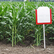 Fertile maize — Stock Photo