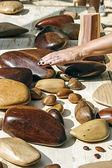Pieces of wood energy — Stock Photo