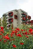 Poppies and buildings-2 — Stock Photo