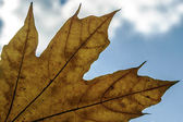 Autumn leaf on sky — Stock Photo