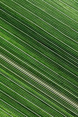 Lines and textures of green leaves — Stock Photo