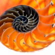Nautilus shell isolated 6 — Stock Photo