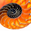 Nautilus shell isolated 6 — Stock Photo #37991535