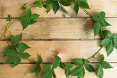 Hoop of leaves on a wooden board — Photo