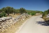 Asphalt road along the olive grove, Croatia Dalmatia — Stock Photo