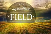 Agriculture fields concept with farm field landscape — Stock Photo
