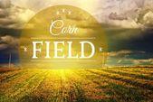 Corn fields concept, farm field landscape — Stock Photo