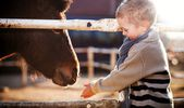 Child feeding pony in mini zoo — Stock Photo