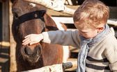 Child and pony in the mini zoo — Stock Photo