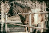 Old style photography horse in the wild west — Stockfoto