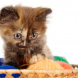 Stock Photo: Sad kitten