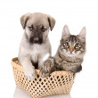 Cat and dog in basket — Stock Photo #12329625