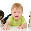 Baby with puppy dogs — Stock Photo