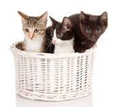 Kittens in basket — Stock Photo
