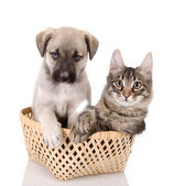 Cat and dog in basket — Stock Photo