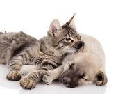 Gattino e un cucciolo insieme — Foto Stock