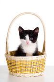Cat in basket. — Stock Photo