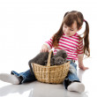 Foto Stock: Little girl playing with british kittens. isolated on white background