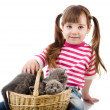Stock Photo: Little girl playing with british kittens. isolated on white background
