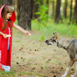 The girl feeds a wolf. — Stock Photo