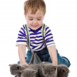 Funny little boy playing with british kitten cat. isolated on white background — Stock Photo #13835581