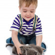 Foto Stock: Funny little boy playing with british kitten cat. isolated on white background