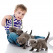 Funny little boy playing with british kitten cat. isolated on white background — Stock Photo