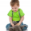 Funny little boy playing with british kittens . isolated on white background — Stock Photo