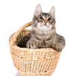 Stock Photo: Cat in basket. isolated on white background