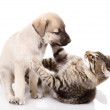 Portrait of a cat and dog. Isolated on a white background — Stock Photo